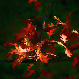 Smoky Mountain Autumn Leaves  by HH Photography of Florida