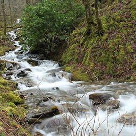 Smoky Mountay Falls by Charlene Cox