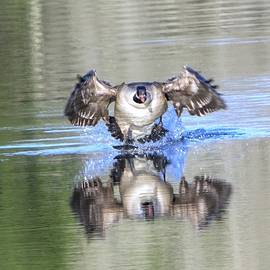 Smooth Landing by Kirk Riedel