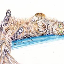 Smug Cat - Shameless by Debra Hall