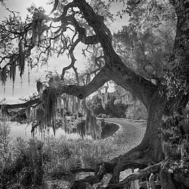 Snake Key Mossy Oak by Jurgen Lorenzen