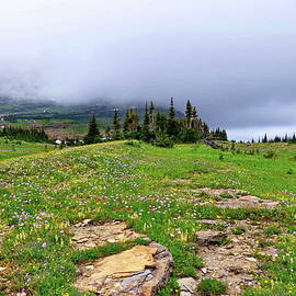 Snow and Flowers in Glacier National Park by Lyuba Filatova