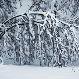 Snow Covered Tree by Carol J Deltoro