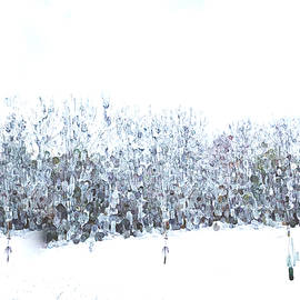 Snow Daze by Ali Bailey
