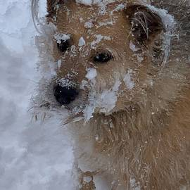 Snow dog by Cindy Gallery