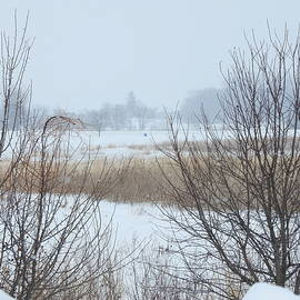 Snow Filled Marsh by Barbara Ebeling