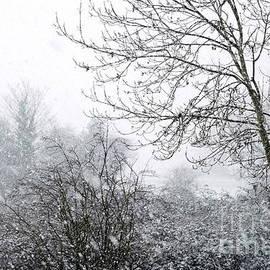 Snow flurry on the moor 1 by Paul Boizot