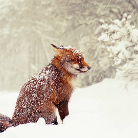 Snow Fox Series - Dreaming of a White Christmas by Roeselien Raimond