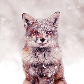 Snow Fox Series - Happy Fox in the Snow by Roeselien Raimond