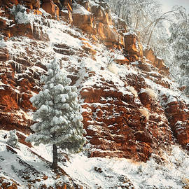 Snow Frosted Red Rocks  by Saija Lehtonen