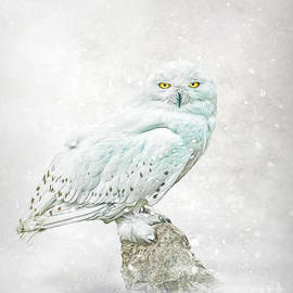 Snow Ghost by Brian Tarr