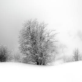 Snow, Hoar Frost and Fog by Imi Koetz