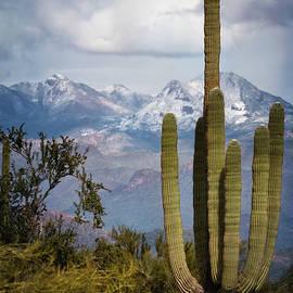 Snow In The Sonoran  by Saija Lehtonen