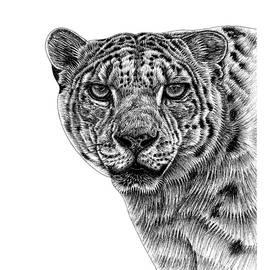 Snow leopard portrait by Loren Dowding