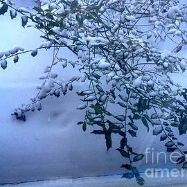 Snow on Holly by Nancy Kane Chapman