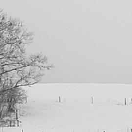 Snow on the Farm by Mary Ann Artz