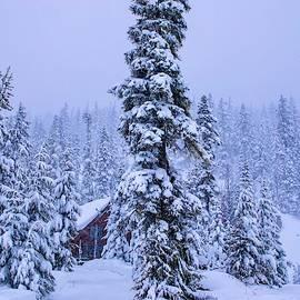 Snowed In by Lynn Hopwood