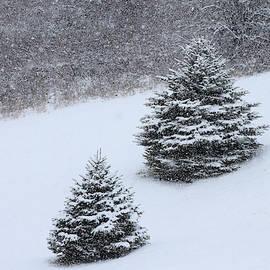 Snowfall on Twin Pines by David Beard