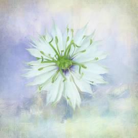 Snowflake Flower by Terry Davis