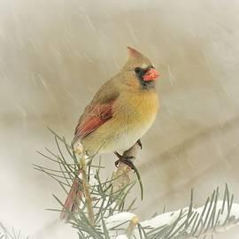 Snowstorm Beauty by Carmen Macuga