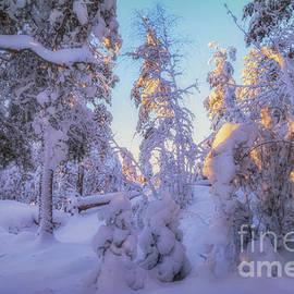 Snowy 4 by Veikko Suikkanen
