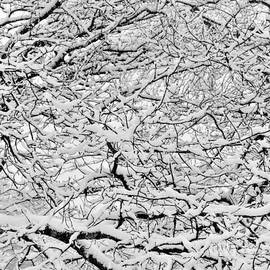 Snowy Abstract #1 by Rick Maxwell