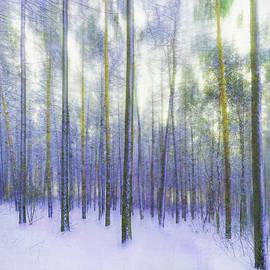 Snowy Birches by Terry Davis