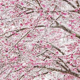 Snowy Blossoms by Mary Ann Artz