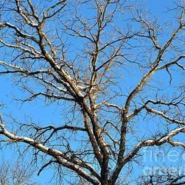 Snowy Boughs Winter Blue Sky Minnesota by Ann Brown