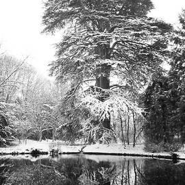 Snowy Cedar Of Lebanon BW V by Lynne Iddon