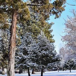 Snowy Day at Drake Park by Dana Hardy