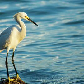 Snowy Egret at Bean Point by Mary Ann Artz