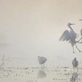 Snowy Egret Fight in the Mist 2868-010720-2 by Tam Ryan