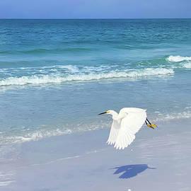 Snowy Egret in Flight on Siesta Key in Sarasota Florida II