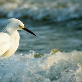 Snowy Egret in the Surf by Mary Ann Artz