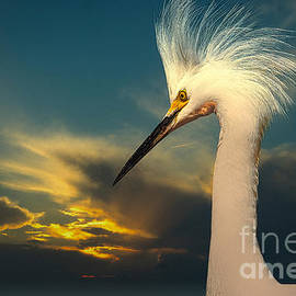 Snowy Egret Portrait and Sunset by Stefano Senise