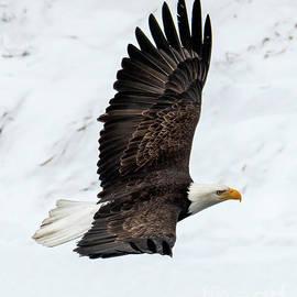 Snowy Flight by Mike Dawson