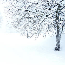 Snowy Landscape, Black Forest by Imi Koetz
