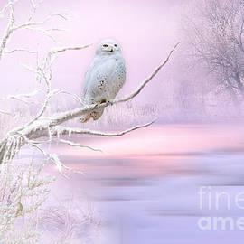Snowy Owl in Winter by Morag Bates