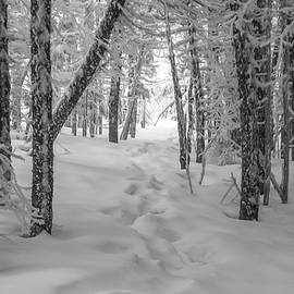 Snowy Winter Path by Chris Whiton