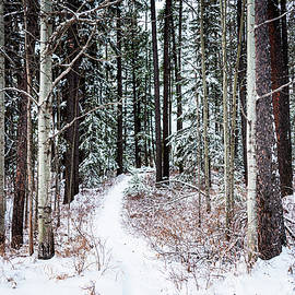 Snowy Winter Trail by Geoffrey Coulthard