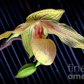 Soar Like A Slipper Orchid by Michael May
