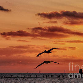 Soaring at Sunset by Ruth H Curtis
