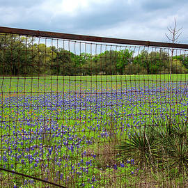 Social Distancing in the Texas Hill Country by Lynn Bauer