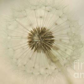 Soft by Alana Ranney