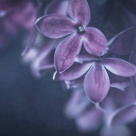 Soft Dreamy Flowers 10 by HB Lee