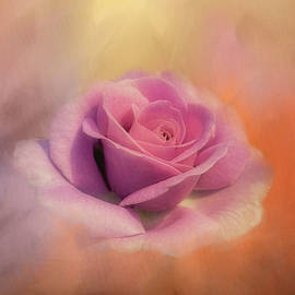 Soft Dusty Rose by Terry Davis
