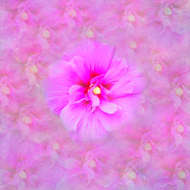 Soft Flower Blossom by Aimee L Maher ALM GALLERY