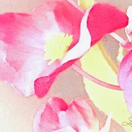 Soft Petals by Lynne Paterson
