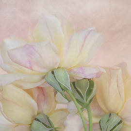 Soft Pink Roses by Terry Davis